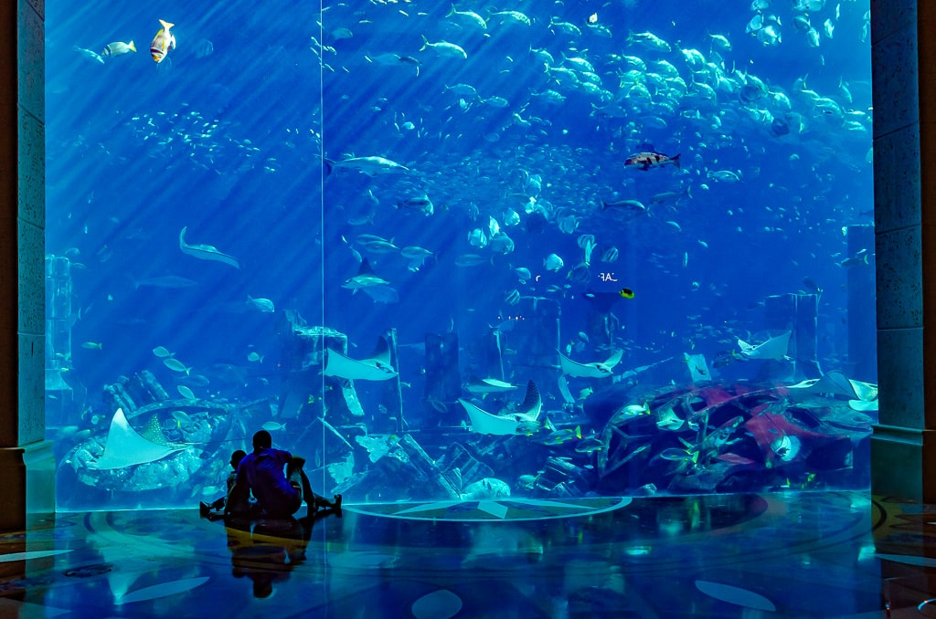 PhotoPOSTcard: Joy to the Fishes in the Deep Blue Sea