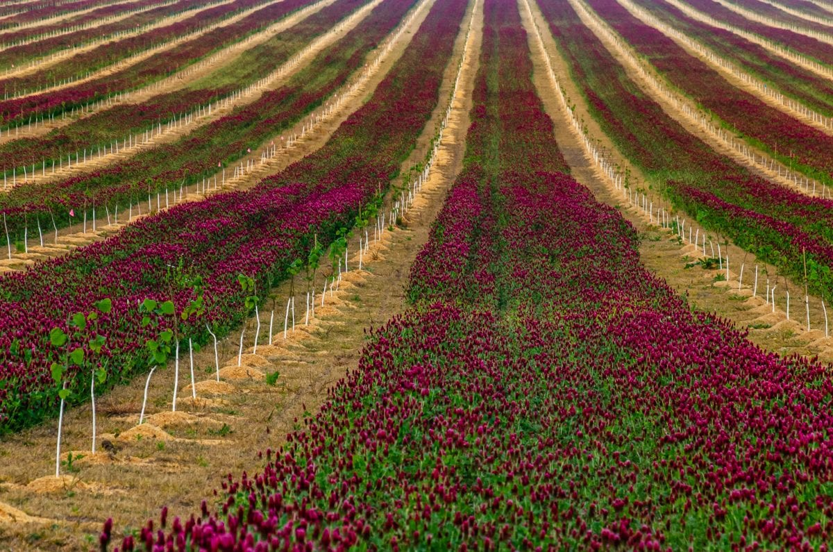 PhotoPOSTcard: Crimson Clover Over and Over