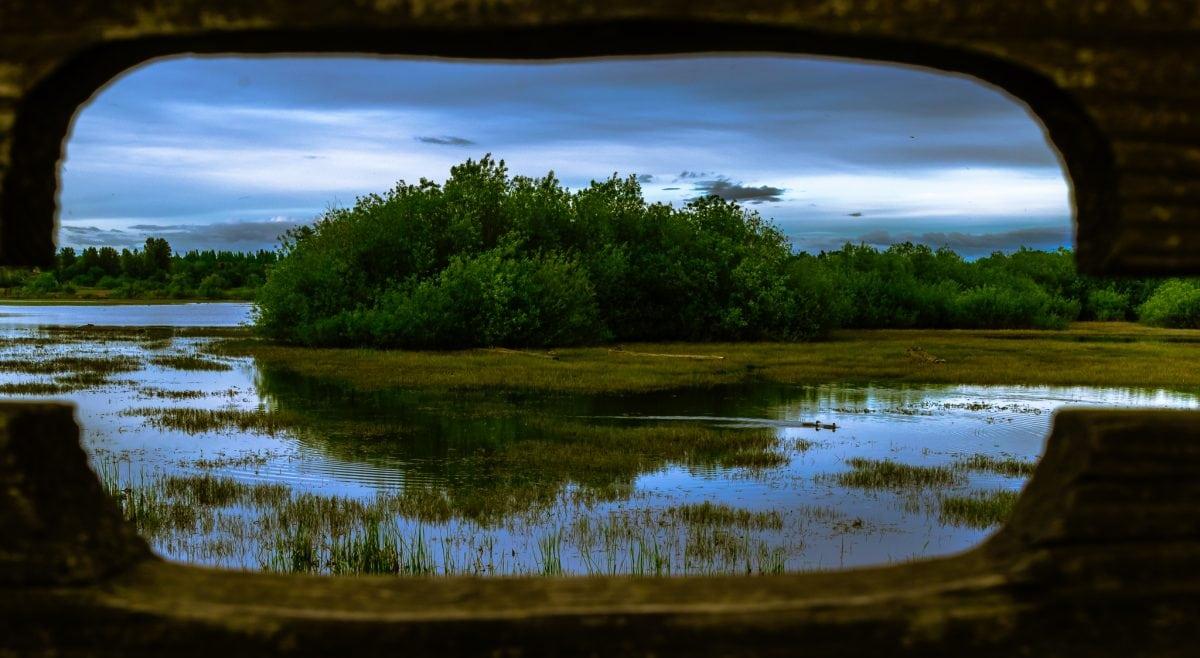 PhotoPOSTcard: Peeking Into Jackson Bottom Wetlands