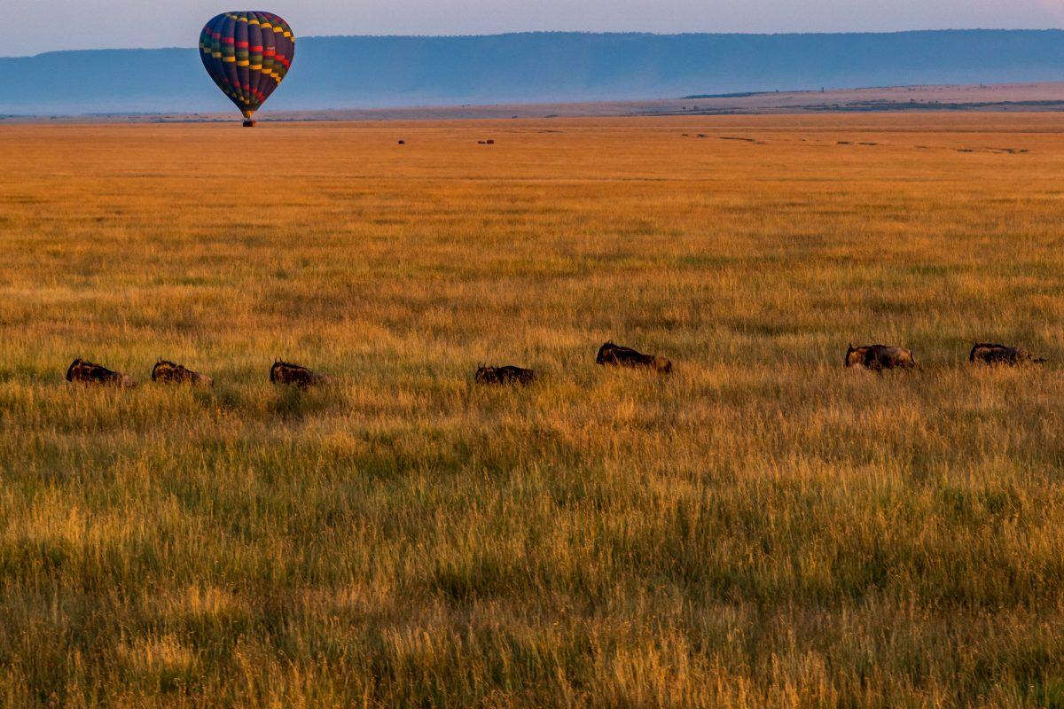 PhotoPOSTcard: Floating Above Kenya's Maasai Mara