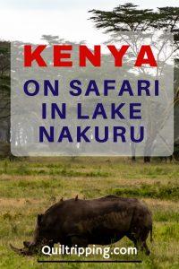 On Safari in Lake Nakuru, Kenya #africa #kenya #lakenakuru #rhinos