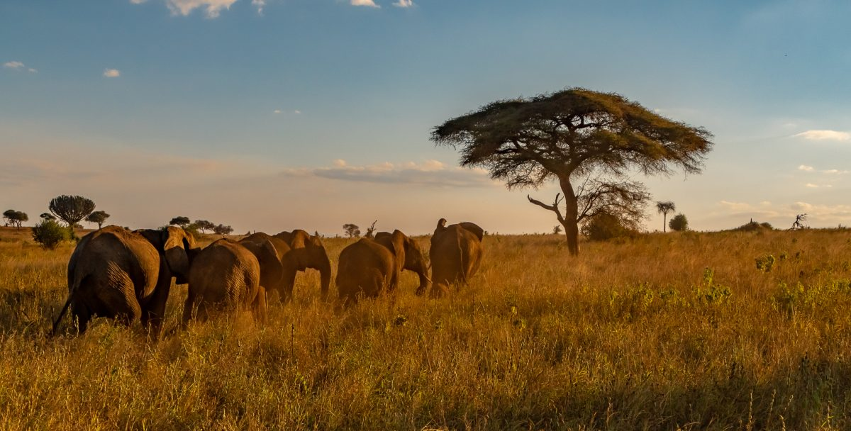 A herd of elephants in Tarengery NP were one of the many African Safari animals I saw