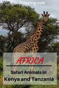 On a safari in Kenya and Tanzania you can count on seeing a large variety of animals and birds is . #safari #africa #kenya #tanzani