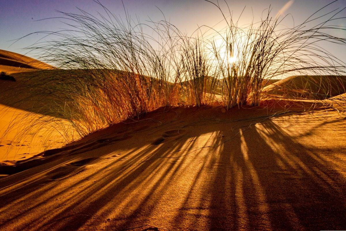 PhotoPOSTcard: Life in the Desert