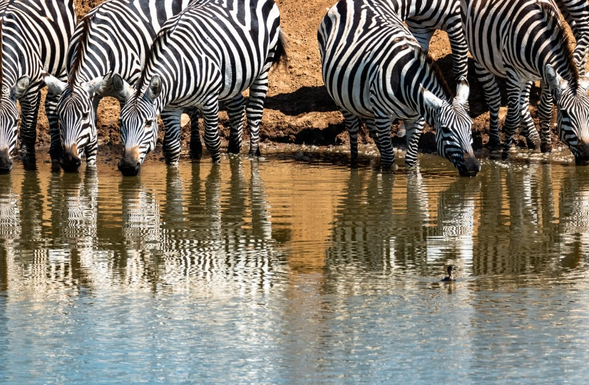 25 Photos to Inspire You to Visit the Enonkishu Conservancy in Kenya
