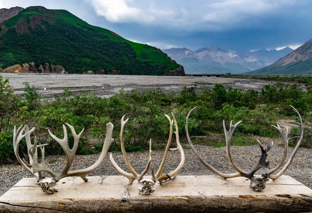 The grand views in Denali National Park