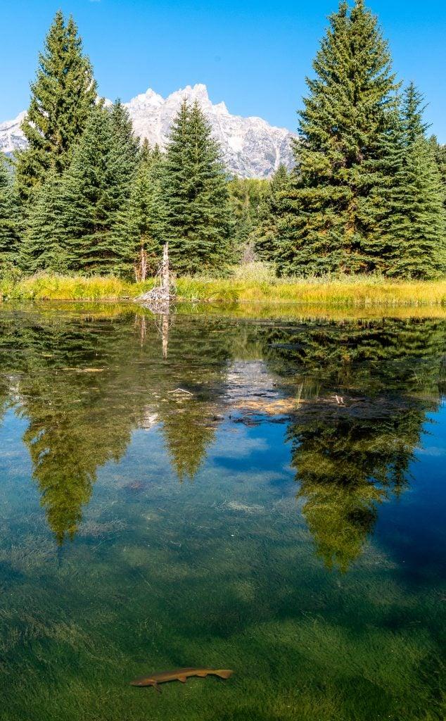 Schwabacher Landing Grand Teton National Park