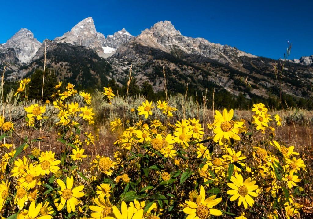 Wildflowers and peaks