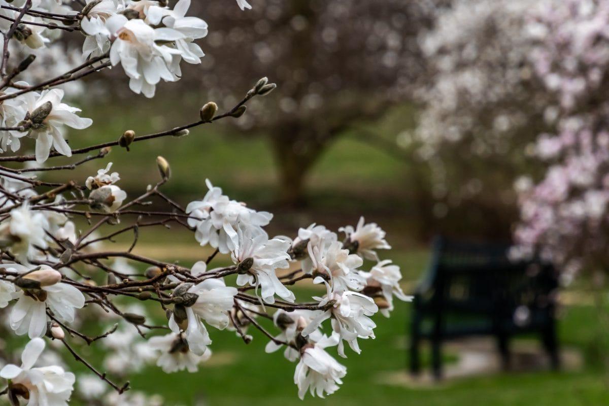 PhotoPOSTcard: Spring Symphony Opus 4