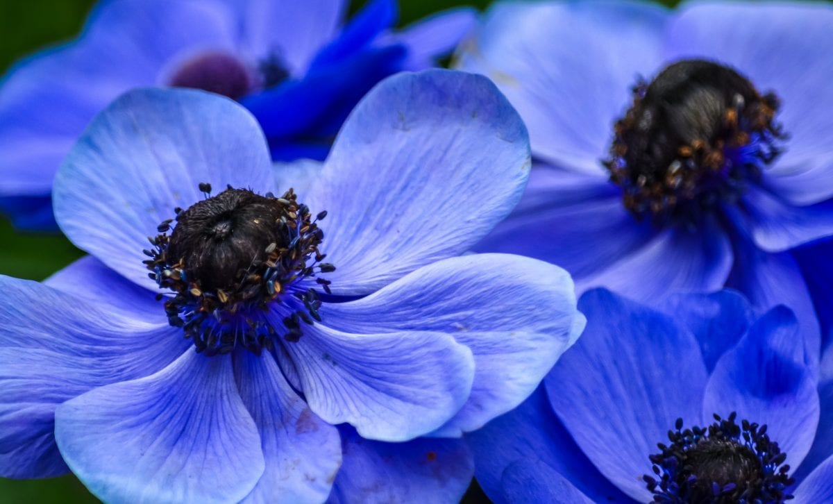 PhotoPOSTcard: Spring Symphony Opus 5