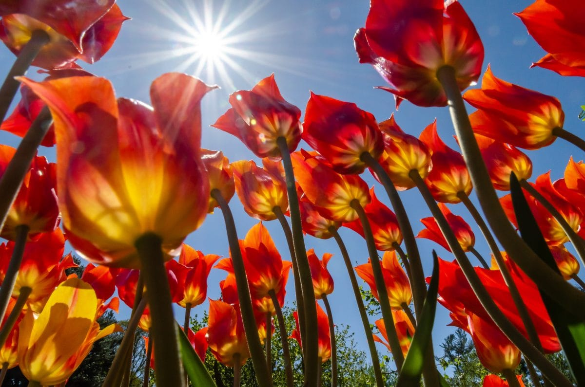 PhotoPOSTcard: Spring Symphony Opus 8