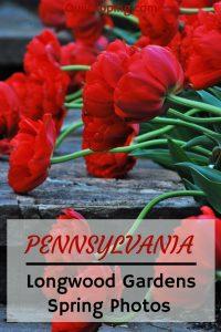 Celebrating spring in Longwood Gardens with beautiful photos #pennsylvania #longwoodgardens #gardens #tulips #spring